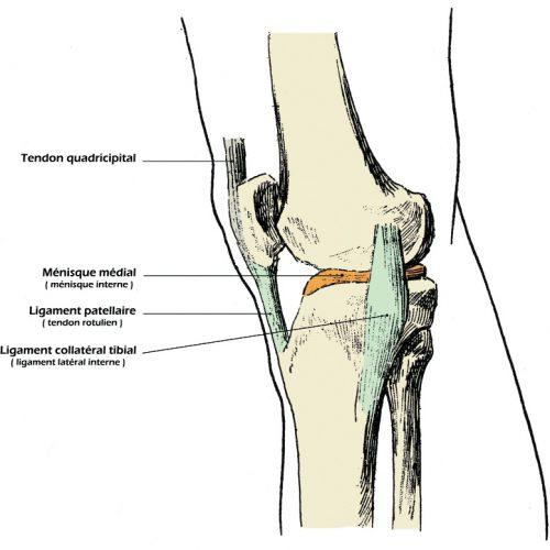 Anatomiel
